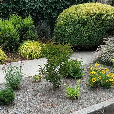 Xeriscape in parking stip with drought tolerant plants